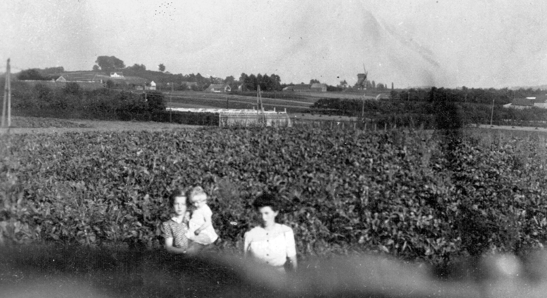 Windmolen en Sint-Gaugericuskerk in Pamel (Roosdaal) 1944